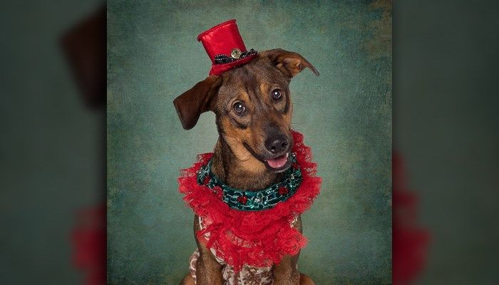 A photographer is hoping photos that recently went viral with a little sprinkle of the holiday season will help fund an animal shelter much-needed funding, plus shine light on bigger issues.