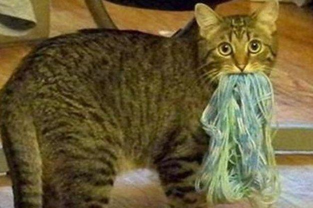 26 Hacks That Will Make Any Cat Owner S Life Easier Diys