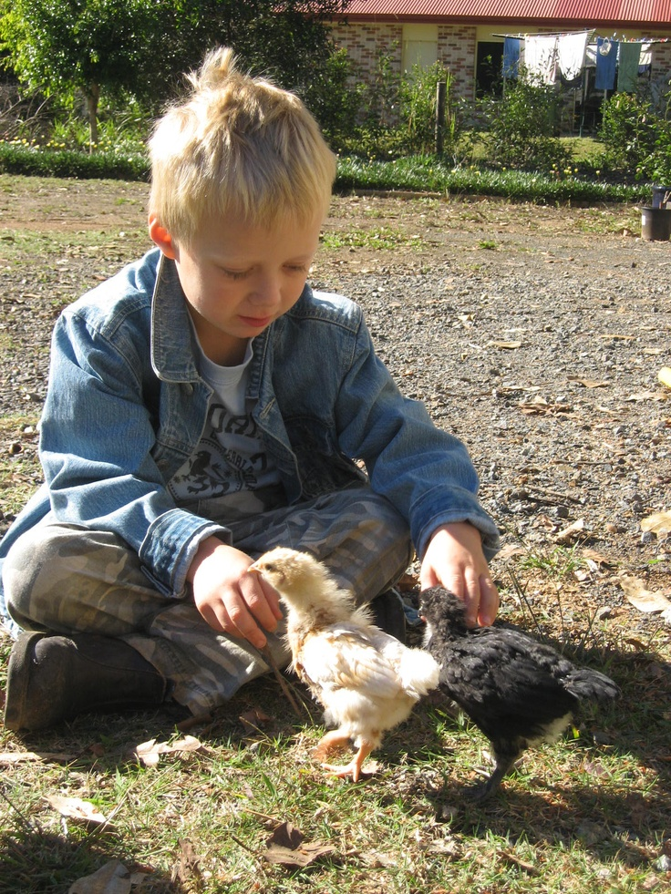 If you have kids then include ways for them to learn and play...baby chickens are loads of fun !!