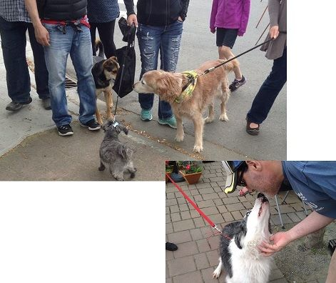 Dogs of Duncan Socializing