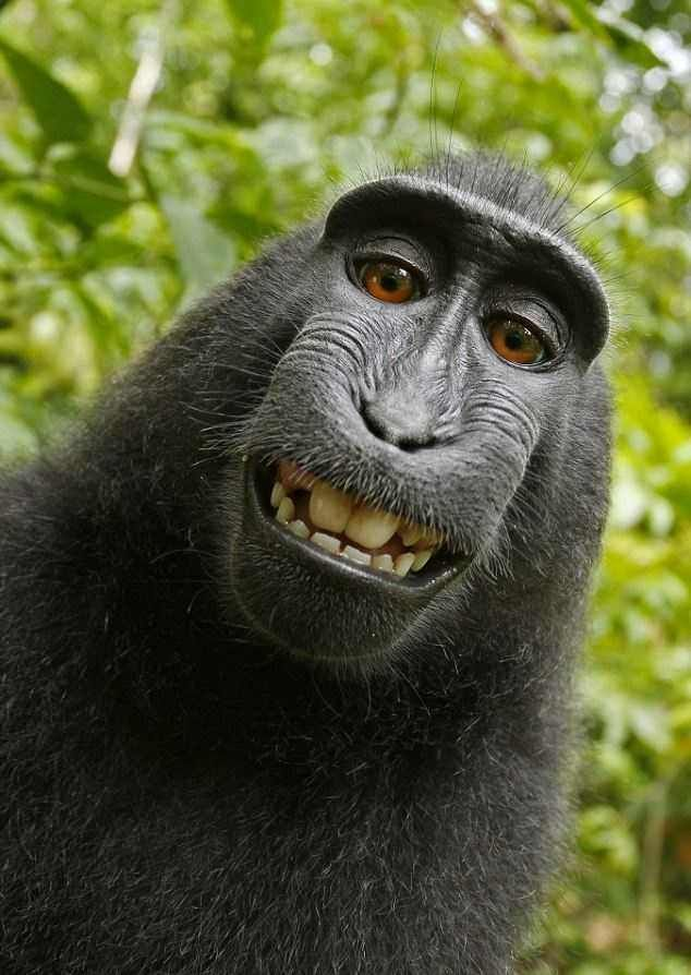 Photographer Left His Camera Unattended For A Bit At A National Park In Indonesia And A Crested Black Macaque Monkey Figured Out How To Operate The Camera Monkeys Funny Animals Cute