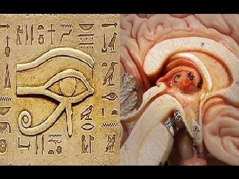 pineal gland, ancient egyptians...