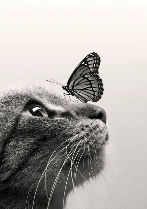Chat avec papillon sur le nez                                                                                                                                                                                 Plus