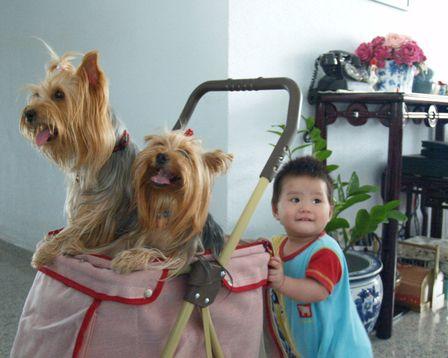 Hal Penting Saat Anak-Anak Bermain Dengan Anjing ~ Tips Info Cara