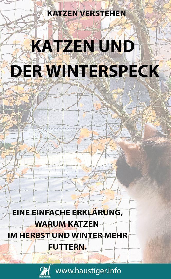 Emma Erklart Katzen Und Der Winterspeck Katzen Katzen Infos