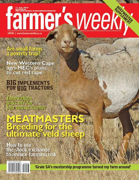 11 July - Meatmaster: SA's new sheep breed