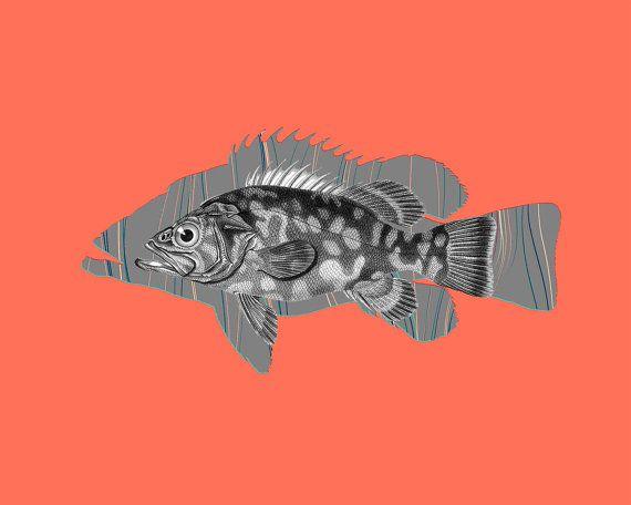 Atlantic wreckfish. Magnificent Vintage Orange Fish. Printable Sea Wall Art, Marine Print, Beach House Decor. Digital print. Instant download. Art print in 8x10' size.