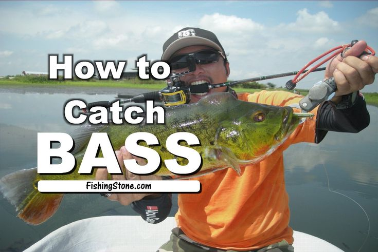 Fishing For Bass 2 Things You Should Know to Catch Them - http://fishingstone.com/fishing/bass-fishing/fishing-for-bass-tips-catch/ -  Bass Fishing - Fishing for bass does not require you to be an avid angler. It does not mean that you will not enjoy a day or two spent bass fishing in your favorite lake, river or pond. When we are talking about fishing for bass, it can't be just done anywhere....
