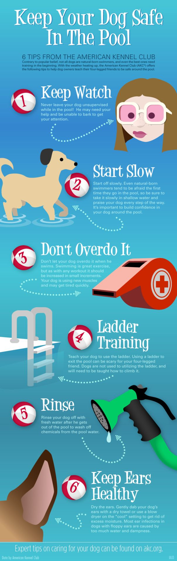 How To Keep Your Dog Safe In The Pool Infographic