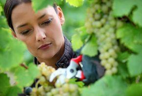 Dona Flor | Nutrientes para Plantas - Quatro tipos de poda de árvores frutíferas