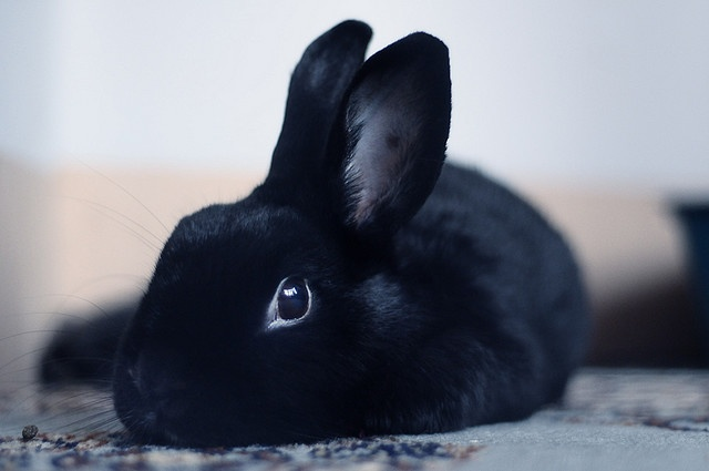 oddly this bunny looks a LOT like my dog