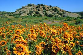 Namaqualand Flower Route.