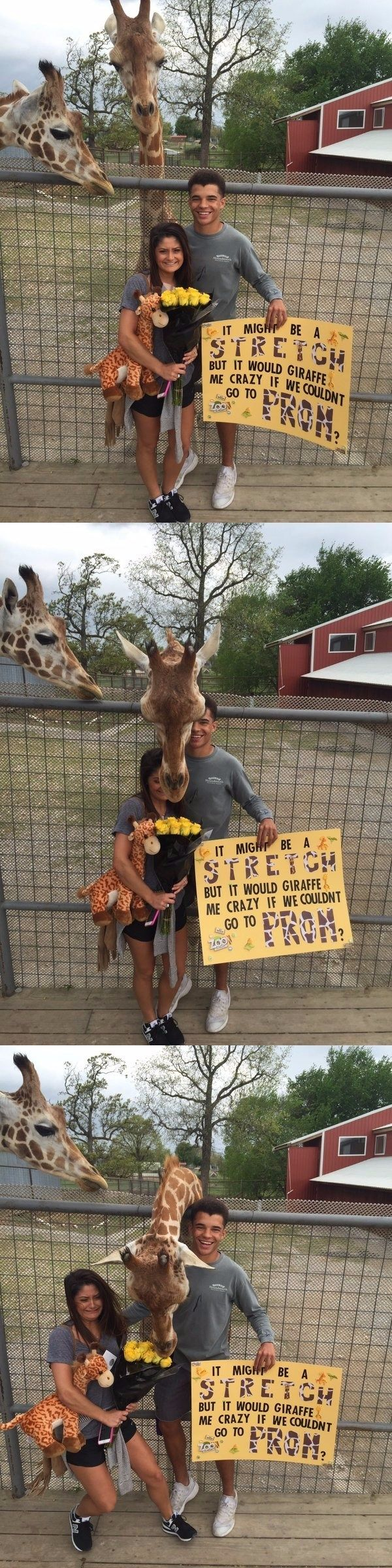 Jealous Giraffe Interrupts Teen's Promposal