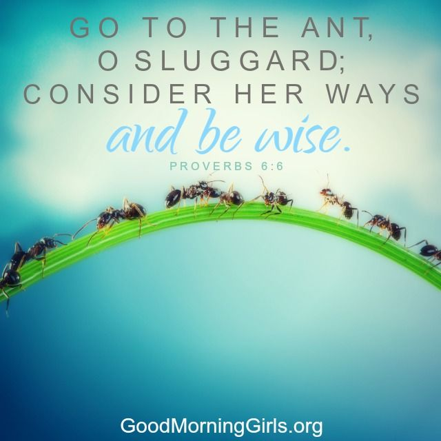Proverbs 6:6 - Go to the ant, O... - Verse-by-Verse Commentary