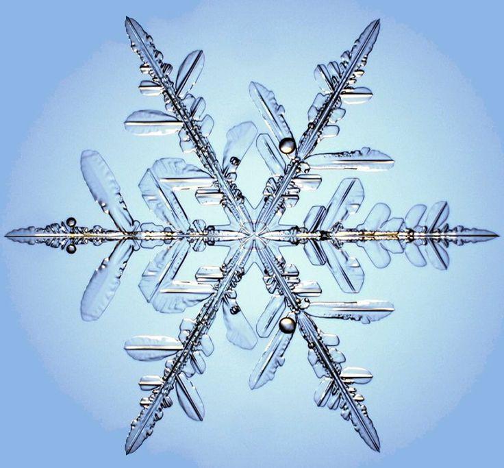 Microscopic close up of real snowflake: Natural Patterns, Snowflakessimpli Amazing, Crystals Snowflakes, Snowflakes Simply Amazing, Real Snowflakes, Gorgeous Snowflakes, Snow Flakes, God Handiwork, Snowflakes Microscope