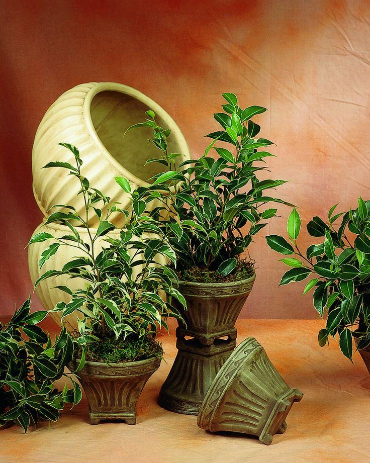 17 best images about plants zimmerpflanzen feng shui energie on pinterest feng shui blog. Black Bedroom Furniture Sets. Home Design Ideas