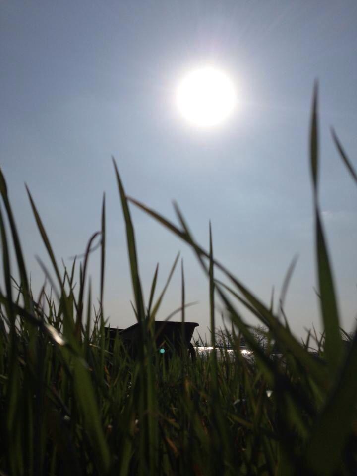夏場の草刈り 懐かしい
