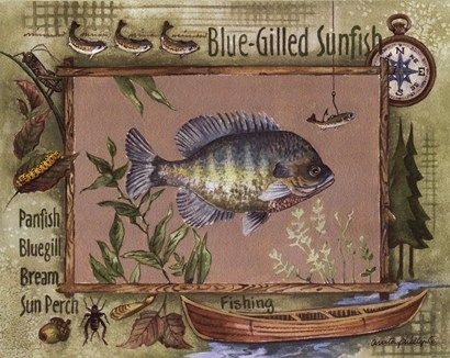 Blue Gill Fish Picture