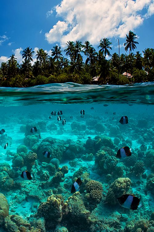 Exploring nature's beauty in this luxury travel destination. Scuba diving and snorkelling on a stunning reef with fish and coral - bliss!