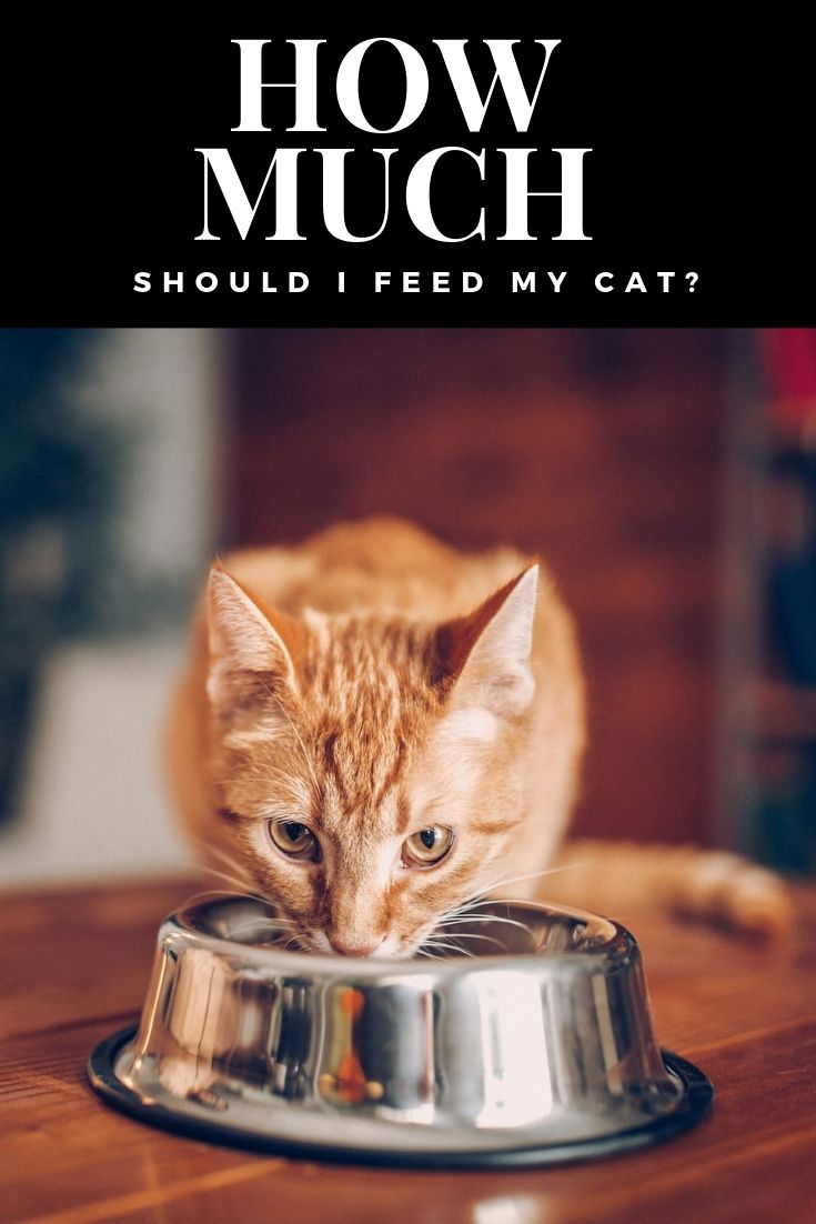 How Much Should I Feed My Cat Best Cat Food Cat Feeding Cat Food
