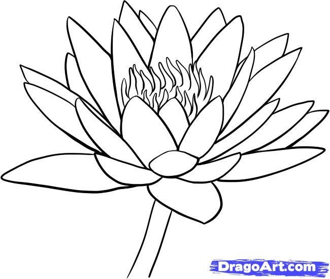 Lotus Flower Drawing | how to draw a water lily step 9 ...