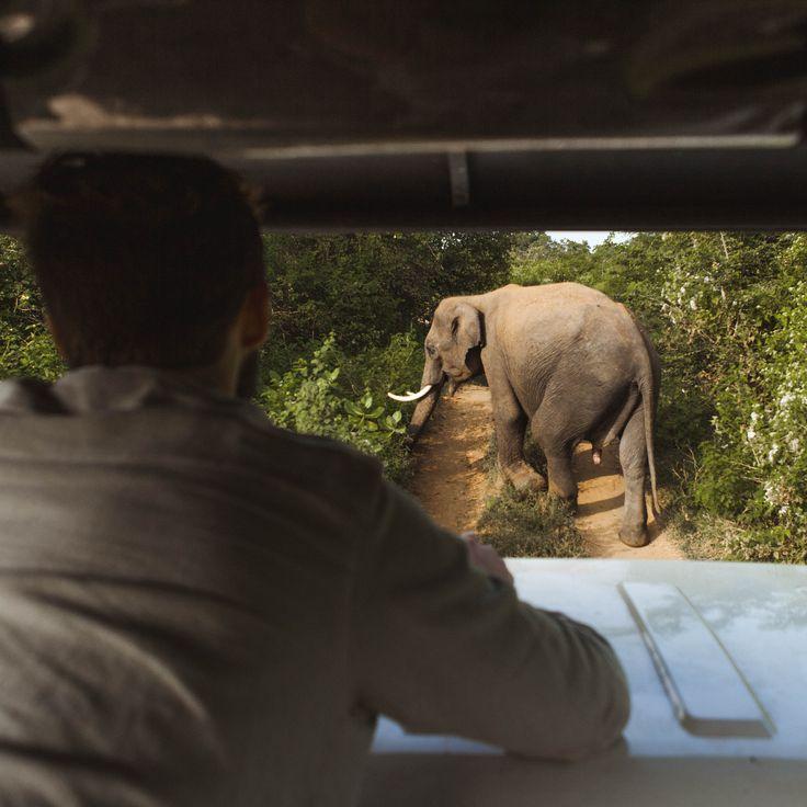 Udawalawe National Park | Sri Lanka | South East Asia | Whale Be Okay | Hollie Freeman X Eron Edward | Travel Couple | Couple Goals | Safari | Adventu…