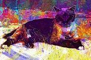 "New artwork for sale! - "" Cat Burmese Tired Lazy  by PixBreak Art "" - http://ift.tt/2hzX0wx"