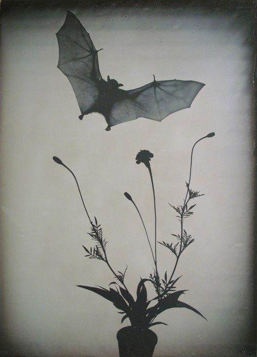 Flight by Phil Nesmith, ferrotype, 2012?  website: http://www.philnesmith.com/