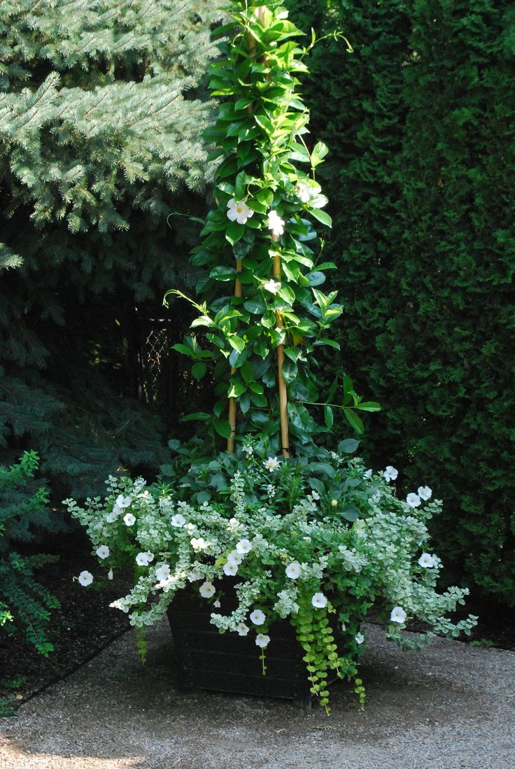 White-container-plantings. Deck-garden - Detroit Garden Works via Dirt Simple Blog. Deborah Silver landscape and garden designer.