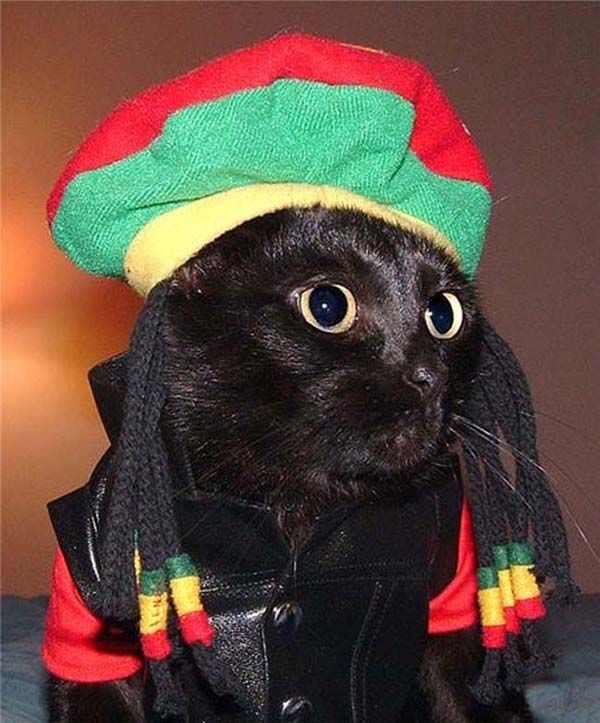 cats in costumes | Cats In Costumes | THEDINGLEBERRY.NET