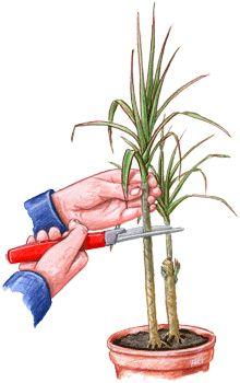 80 best fichas plantas images on pinterest - Como arreglar mi jardin ...