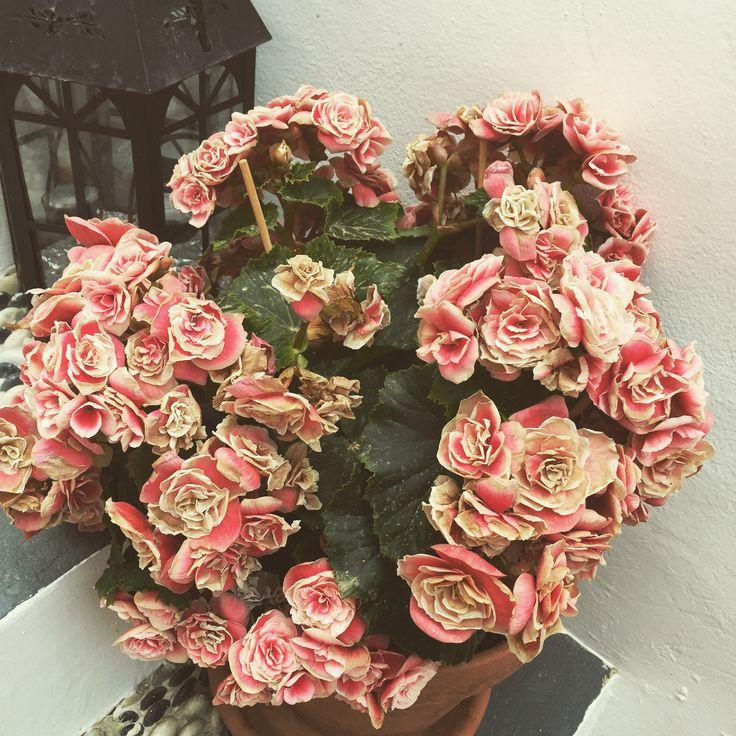 Lindos, Greece - Gorgeous flowers Vintage