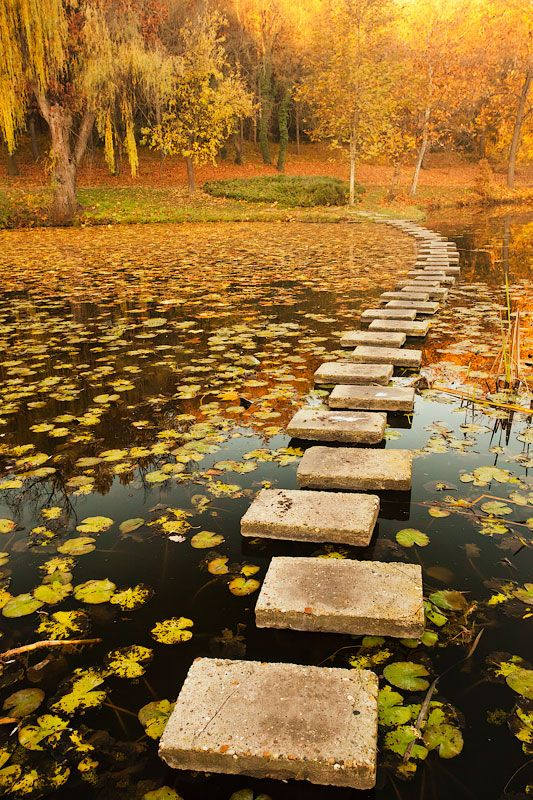 Steps In the Lake.  I'd totally fall in, but love the shot.: Ponds, Walks, Walkways, Autumn, Lakes, Step Stones, Stones Paths, Places, Pathways