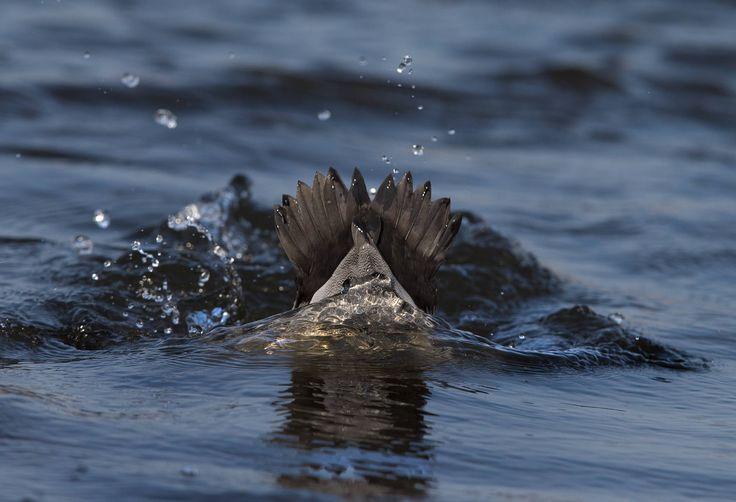 Tuffo - betty colombo 2015
