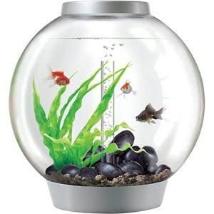 sphere fish bowl