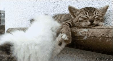 Play With Me ! - what a cute kitten GIF!