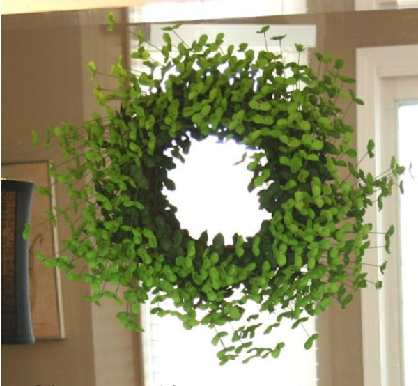 shamrock wreath how do i make this container