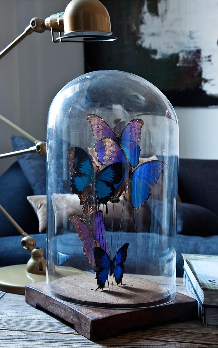 Butterflies under a globe