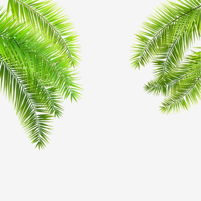 Summer Tropical Palm Leaves Hanging On Transparent Background Nature Clipart Palm Vector Png And Vector With Transparent Background For Free Download In 2021 Leaves Illustration White Background Wallpaper Plant Vector