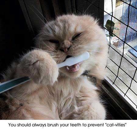 You should always brush your teeth