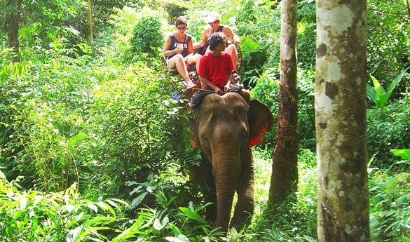 Elefantes en Koh-Chang.