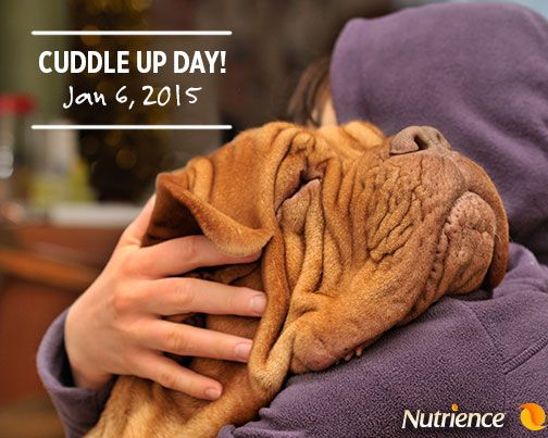 After a nice long #walk, or playing with the laser, a good cuddle is needed. Share a picture of you and your #NutriencePet cuddling up on this special day! #dog #cat