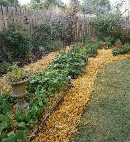 Vegetable garden along fence to corner mulched with for Corner vegetable garden ideas