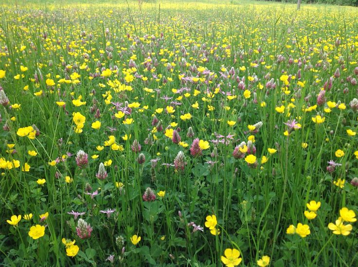 Spring meadow