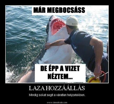 A cápának jobbam fájt mint az emernek az hogy  megharapja a cápa B-)