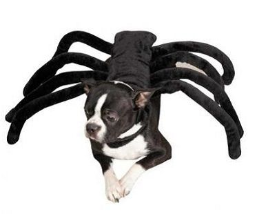 This spider dog costume makes the best Halloween outfit for your pooch! It's available in a range of sizes to suit most breeds of dogs. Made from furry fabric similar to spider hair and had 8 bendable legs.