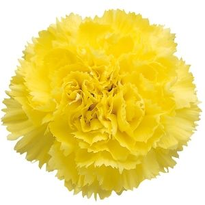 Carns smell great, and are gorgeous in tight bunches. Perfect for guest tables and inexpensive!