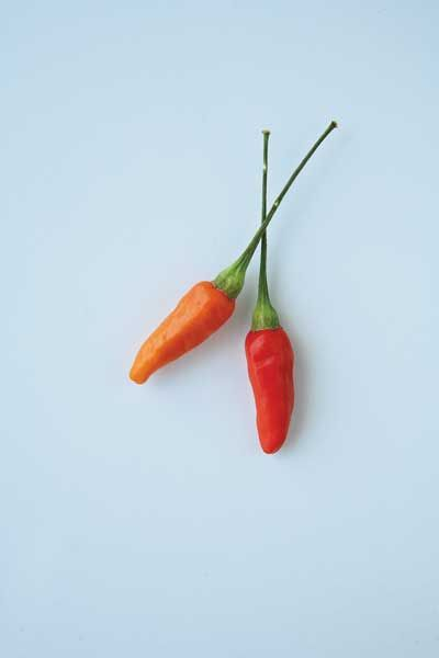 Tabasco The tabasco pepper is the best-known domesticated variety of the C. frutescens species. It's not known when tabasco peppers first mi...