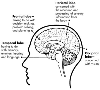 Best 25+ Brain lobes and functions ideas on Pinterest