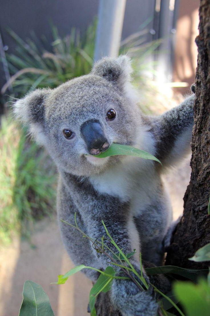 Nature Wildlife In Sydney, Australia – Extreme Outdoor Adventure & Spring Tourism - Way To Be Happy (16)
